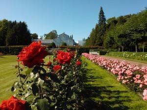 Helsinki City rose gardens
